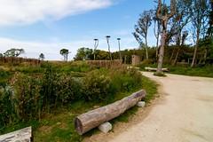 _DSC6785 (durr-architect) Tags: info centre zwin heartland belgium architecture cousse goris nature park wood structure border aday16 group area green trees