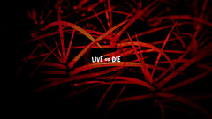 Live or Die (1920 by 1080 desktop) (Bible Verse Photo) Tags: cactus spike spikes red desktop hd 1920 1080 hires free creative commons romans 148 14 8 new testament god dark wallpapper jesus christian