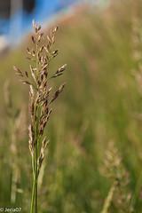 Planta (FabianJeria) Tags: plants macro macrodreams macrofotografia