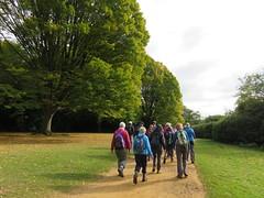 UK - Berkshire - Near Virginia Water - Walking through Windsor Great Park (JulesFoto) Tags: uk england southbankramblers berkshire windsorgreatpark virginiawater walking
