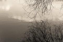See-Spiegleung (Darenae) Tags: see lake baum tree ste branches nature winter kalt schnee snow spiegelung reflection mirror mirroring spiegel black white bw sw schwarzweisbw