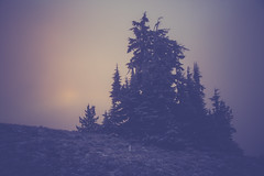 IMG_7560 (donaldhenson) Tags: landscape foggy sunrise trees sureal