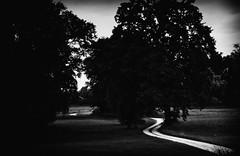 Where the streets have no name .... (dannicamra) Tags: nikon d5100 germany bavaria bayern landschaft landscape bw black white schwarz weis sw monochrome strase weg path street tree baum