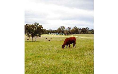 471 Watsons Creek-tilmunda Rd, Watsons Creek NSW