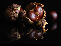 Conkers (PrunellaCara) Tags: conkers seeds nuts nature brown stilllife textures closeup