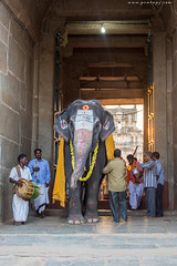 Lakshmi the Temple Elephant (Pratap J) Tags: india karnataka hampi
