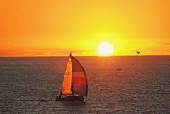 Happy New Year! (jbuphotography) Tags: ocean ca sunset bird beach clouds boat nikon heaven waves yacht seagull horizon d200 perfection torrance