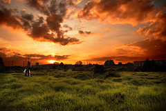 Atardecer en la Sabana... (Andresw9) Tags: sunset sky orange green luz sol clouds cow colombia bogota farm cielo nubes campo ligth naranja tarde vacas granja rayos sabana afueras atardece