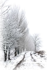 vers le Paradis Blanc ? (.Sophie C.) Tags: winter snow hiver neige nord 59 cambrsis masnires rgionnordpasdecalais