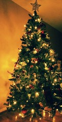 Christmas Tree (covercencogrigore) Tags: christmas new tree lights december year memories decoration covercencogrigore