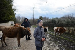 Alan and granfather (ksushasmyr) Tags: family winter portrait nature cow cows granfather abkhazia