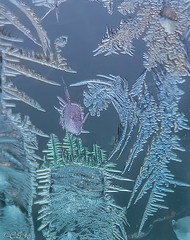 Frost # 47 (claudiaulrikegoodall) Tags: blue winter ice window frost