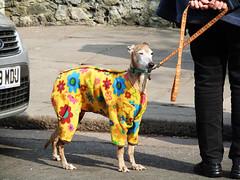 The Dog's Pyjamas