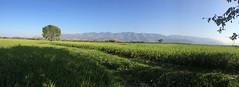 Panorama #green #mountain #wide #rice #greenland #view (Vineeth Jaganathan) Tags: mountain green view rice wide greenland kamayagoundanpatti