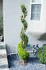 (deanmackayphoto) Tags: window yard garden landscape design losangeles gate topiary stair entrance hedge drought shutter shrub westhollywood gravel boxwood landscapedesign droughtresistant larisacode