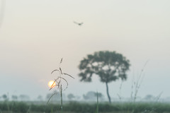 lost (Naveen Gowtham) Tags: life morning sun india tree green bird love home nature rural sunrise canon landscape lost photography alone village ngc streetphotography efs1855mm ng agriculture tamilnadu nationalgeographic cwc villagelife naveen rurallife agri incredibleindia truelife tiruvarur alonetree unitedcolorsofindia canon600d gnaveen agrifield naveensphotography naveengowtham naveeng ottakudi naveengowthamphotography