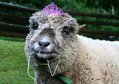 The Birthday Crown... (aprilamb) Tags: