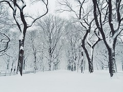 Central Park (knowtomorrow) Tags: nyc newyorkcity trees winter white snow storm centralpark manhattan symmetry iphone 5s