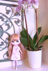 Rosie and purple orchids