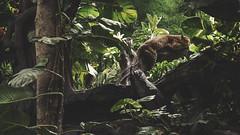 14.12.28 :: Day Five [BD2014] (AnggaPJ) Tags: bali fuji tiger safari fujifilm fujinon f12 xf 56mm xt1 xf56mmf12r