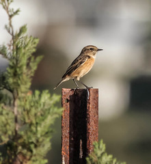 IMG_1761 (ibzsierra) Tags: bird canon ibiza ave 7d pajaro eivissa oiseau baleares 100400isusm