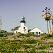 Point Loma Lighthouse Between Plants