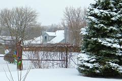 More Snow 1 March 2015 4188Ri 4x6 (edgarandron - Busy!) Tags: trees yards snow tree yard backyard spruce bluespruce
