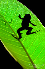 Frog Silhouette II (Ged Delany) Tags: nature wildlife frog d40