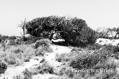 The salt marshes area near Murcia / San Javier (10b travelling) Tags: 10btravelling arenales carstentenbrink espana europa europe iptcbasic murcia parqueregionalsalinasyarenalesdesanpedrodelpinatar pinatar places salinas sanjavier sanpedro spain spanien bw biodiversity blackwhite blackandwhite cmtbbw marshes monochrome nationalpark salt tenbrink
