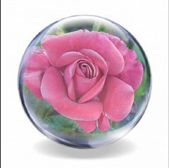 2016-07-19 rose in ball (april-mo) Tags: round ball crystalball sphere flower summer rose