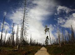 Polednik (JaUtlnning) Tags: umava nature czechrepublic trees sky clouds road bohemianforest canoneos550d