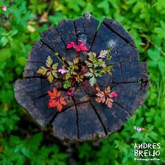 Sobre una buena base (Andres Breijo http://andresbreijo.com) Tags: naturaleza vida tronco arbol tree verde green nerja barrancodelacoladilla coladilla axarquia malaga espaa spain nature