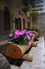 La natura... (Pier Romano) Tags: fiori flowers vaso tronco pieve teco imperia liguria italia italy riviera ligure natura