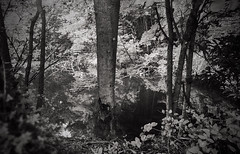 207/366 More in the Lake (Bernie Anderson) Tags: ifttt 500px no person tree wood landscape nature fog outdoors leaf scenic mist park environment light branch mystery shadow daylight weather greenville south carolina yeahthatgreenville folkloristic black white monochrome