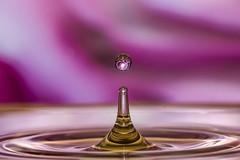 Bounce (anitavaroy) Tags: macro reflection waterdrop bounce tabletop
