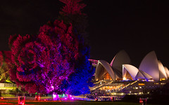 _MG_4880-Pano.jpg (Tibor Kovacs) Tags: night colours tree vivid australia events sydney sydneyoperahouse projections light