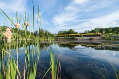 Peaceful Reflections (sullivan1985) Tags: railroad summer lake reflection train newjersey pond nj july railway sparta westbound yellowjacket susquehanna susieq emd sussexcounty sd60 nysw newyorksusquehannawestern su99 nysw3804 nysw3802 nysw3806