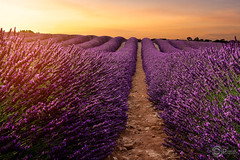 _MG_1063 copie (Pcphoto56350) Tags: landscape france sunset sunrise plateau valensole lavande soleil