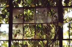 Overgrown (Nate Conn) Tags: urban exploring abandoned building decay urbex atlanta green leaves vine vines broken window rust rusty metal brown