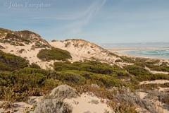Habitat of L. multiscutata (Jules Farquhar.) Tags: julesfarquhar sa landscape sand dune beach southaustralia coast