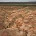 Muitos fósseis marinhos na região