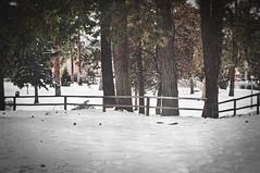 Narnia (greghanover) Tags: winter snow oregon forest landscape bend wonderland drakepark