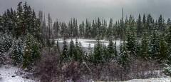 Lake Panorama (3 images 2.1 aspect ratio) Near Mount Washington: HDR (from single TIFF) - Kodak Easyshare Z980 (Logos Photography) Tags: vancouverisland mountwashington alpineresort kodakeasysharez980 hdrfromsingletiff
