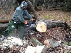Cutting Wood 2780 (newspaper_guy Mike Orazzi) Tags: wood tree me nature outside outdoors maple log chainsaw cutting craftsman firewood 20inchbar