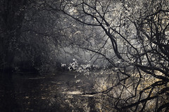 Fairy Dust (Russ Barnes Photography) Tags: wood trees lake pool spring nikon infrared warwickshire d800 720nm russbarnes nikkor85mm14g