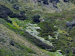 A mossy glade (Lesley A Butler) Tags: summer mountains alps forest landscape australia victoria alpine wildflowers mounthotham snowgums greatdividingrange northeastvictoria 20150115n