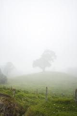 vulcanic fog (Chiarix) Tags: street costa mountain tree verde green car silhouette fog america strada centro central rica vulcan nebbia albero montagna macchina vulcano iraz