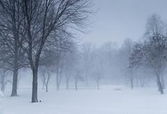 Saturday in the Park (tquist24) Tags: park trees winter snow cold tree bristol geotagged nikon unitedstates indiana bonneyvillemillcountypark nikond5300