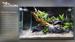 Layout5 - Plants description (Filipe Oliveira (FAAO)) Tags: plant layout aquarium live event workshop aquatic planted aquascaping faao aquaflora