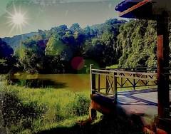 https://foursquare.com/v/frim-kepong/51f5ef30498e76b17de190b3 #trip #travel #holiday #outdoor #green #garden #park #Asia #Malaysia #kualalumpur #kepong #frim # # # # # # # # (soonlung81) Tags: trip travel holiday outdoor green garden park asia malaysia kualalumpur kepong frim